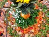 Seafood Paella with Sunflowers