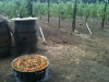Paella in the Vineyards