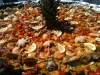 Paella with Pineapple Center Piece
