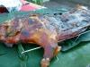 pig-roast-003